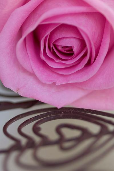 Aqua rose