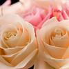 Flower050f (Rose)