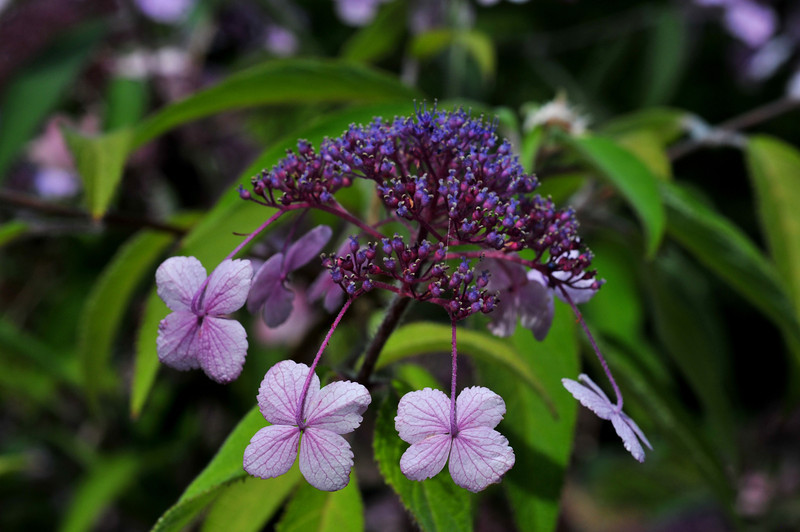 raining lavender