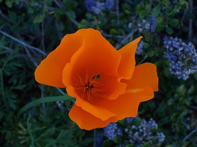 SB Botanical Garden March 7th, 2004