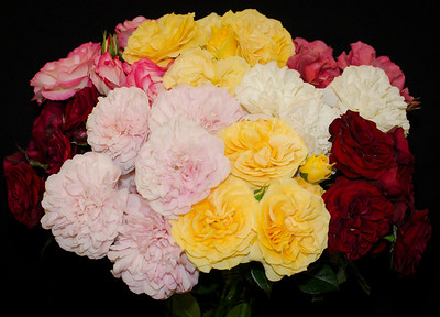 Floribunda Collection of 5 to 9 Stems, shown in one vase - Best of Show, Bob & Dona Martin