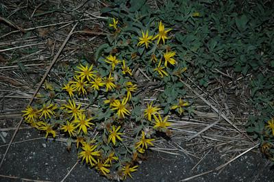 Salt Lake City Flowers - 9-06