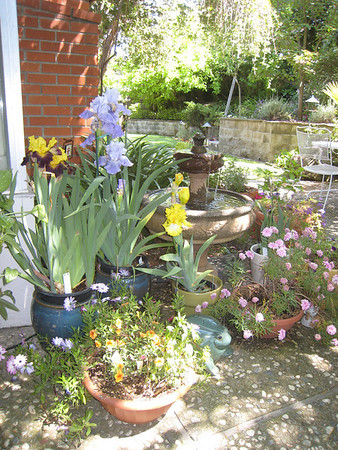 """San Benito """"Iris Garden"""" 2011"""