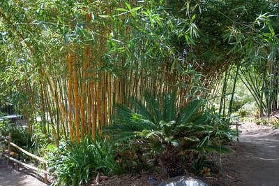 2012-03-27 SD Botanic Garden-8284