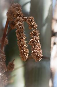 2012-03-27 SD Botanic Garden-8282