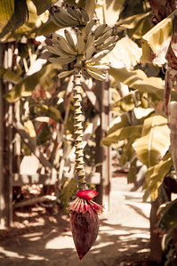 2012-03-27 SD Botanic Garden-8314