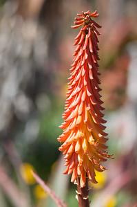 2012-03-27 SD Botanic Garden-8276