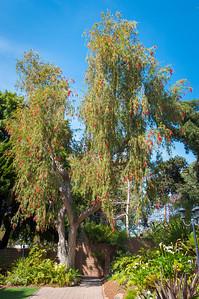2012-03-27 SD Botanic Garden-8331