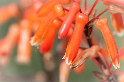 2012-03-27 SD Botanic Garden-8281