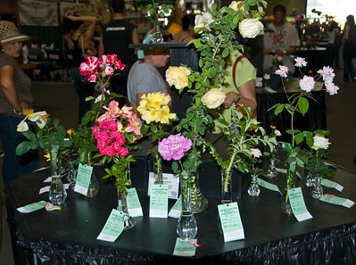 Del Mar Fair Roses06140904
