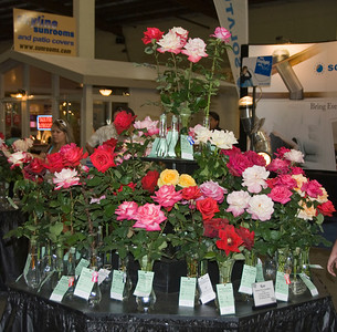Del Mar Fair Roses06140908