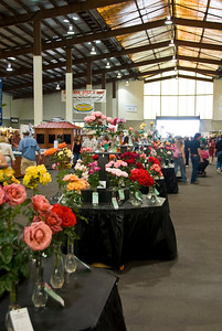 Del Mar Fair Roses06140909