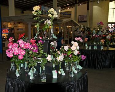 Del Mar Fair Roses06140905