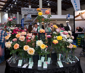 Del Mar Fair Roses06140907