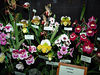 Orchid Show 2006 208