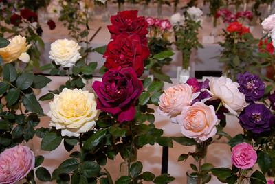 Browse a rose show to discover new or unfamiliar roses to grow. These include shrubs and old garden roses.