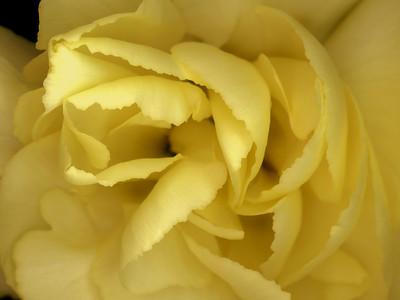 Scanned Flowers