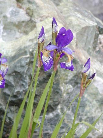 Seldovia Flowers