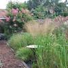 verkoopsvakken van de grassen met op de achterzijde Rosa 'Alden Biesen' bloei van juni tot november. Een echte topper !