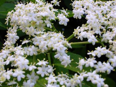shankargallery flowers