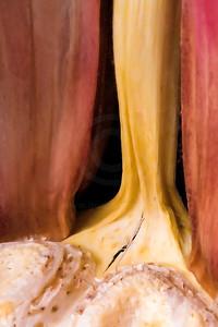 garlic6783 copy1