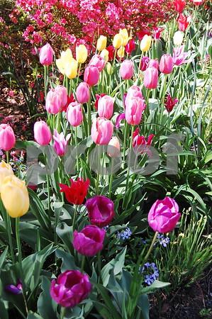 Sisters' Garden Spring 2009