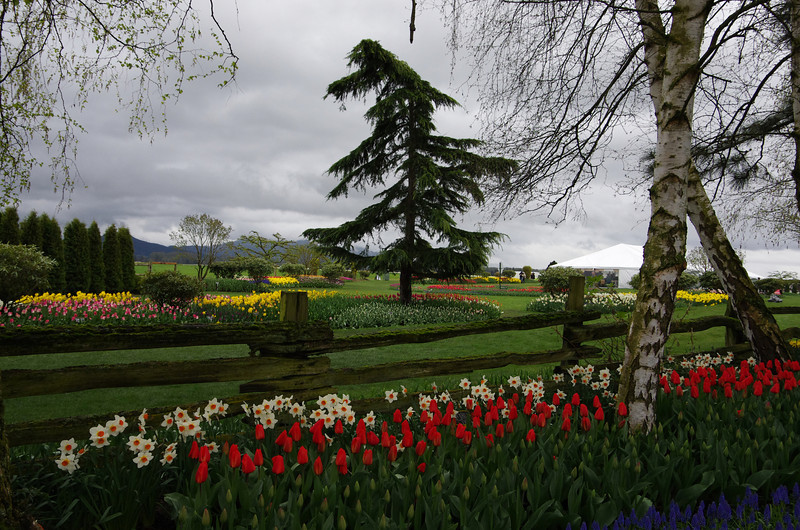 tulipi gardens