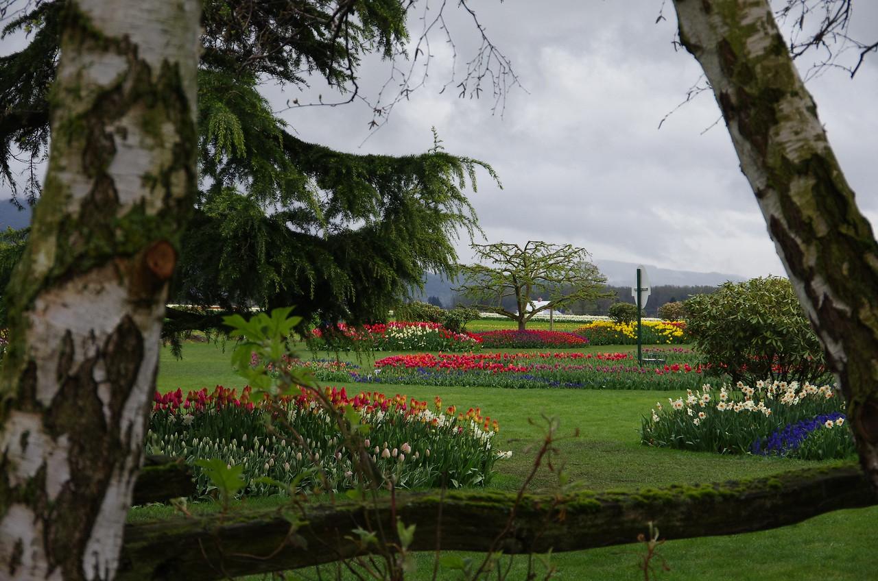 tulip Gardens