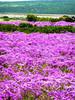 West Coast National Park South Africa