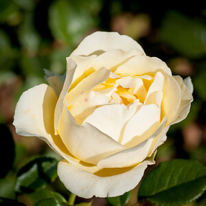 11-02-12 South Coast Botanic Garden-9695