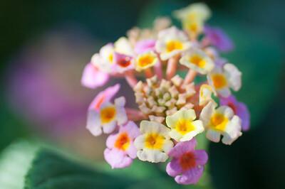 11-02-12 South Coast Botanic Garden-9647