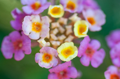 11-02-12 South Coast Botanic Garden-9645