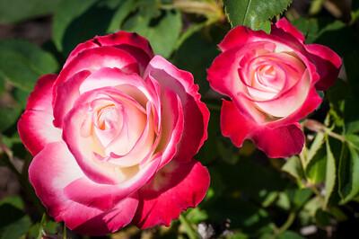 11-02-12 South Coast Botanic Garden-9689