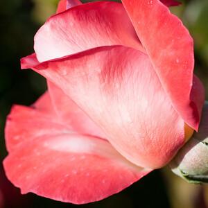 11-02-12 South Coast Botanic Garden-9698