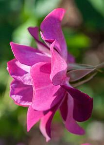 11-02-12 South Coast Botanic Garden-9702