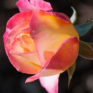 11-02-12 South Coast Botanic Garden-9666