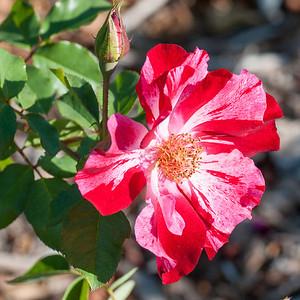 11-02-12 South Coast Botanic Garden-9728