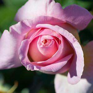 11-02-12 South Coast Botanic Garden-9718