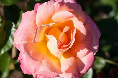 11-02-12 South Coast Botanic Garden-9731