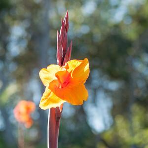 11-02-12 South Coast Botanic Garden-9651
