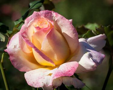 11-02-12 South Coast Botanic Garden-9669