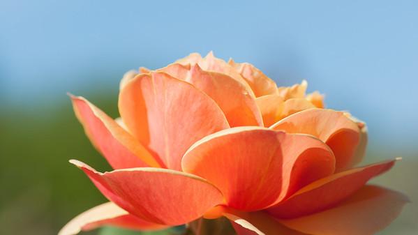 11-02-12 South Coast Botanic Garden-9672