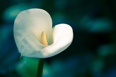 2012-05-07 South Coast Botanic Garden-9183
