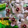 Moon Flower 02_ JU8S1837