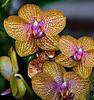 Snake & Speckled Orchid_JU8S0738
