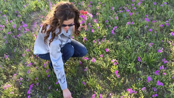 South TX Wildflowers