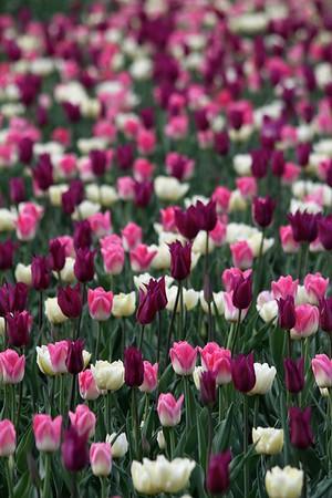 spring 14