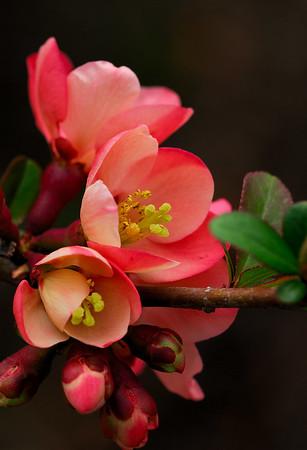 Spring 2006 Flowers