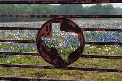 Spring 2010 Texas Wildflowers