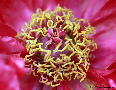 Inside flower world-